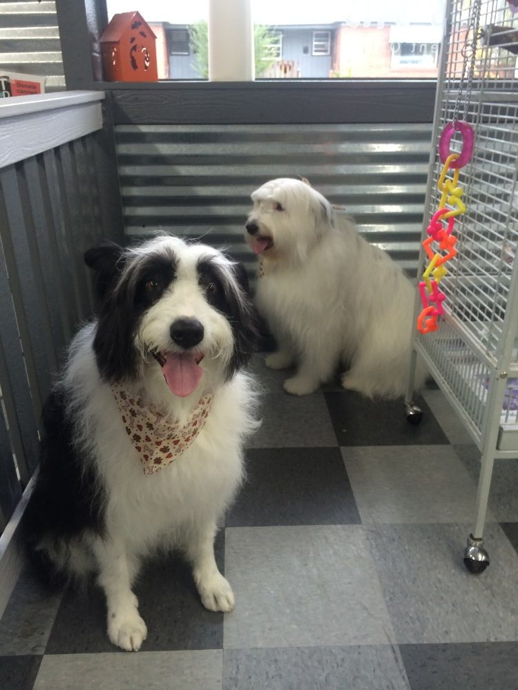 pet grooming idaho