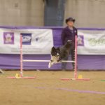 canine training classes idaho