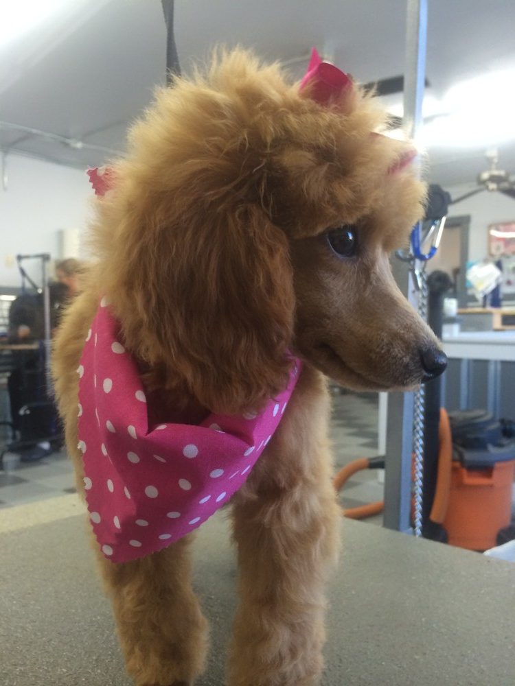 pet grooming idaho