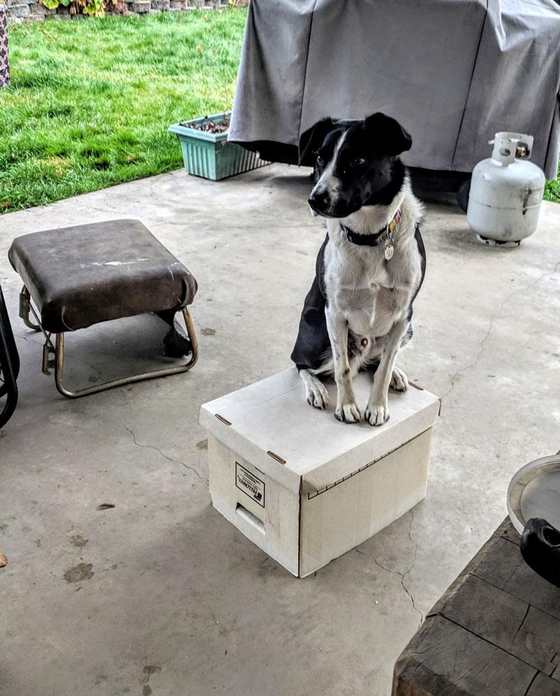 Best Puppy Training Classes Near Me In Japan
