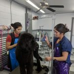 Dog Grooming Training in Boise