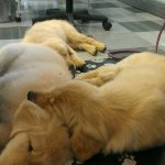 puppy grooming idaho