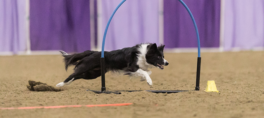 dog agility training idaho